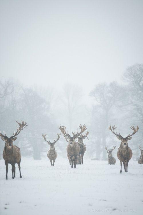 deer-lovely-maow-design-blog