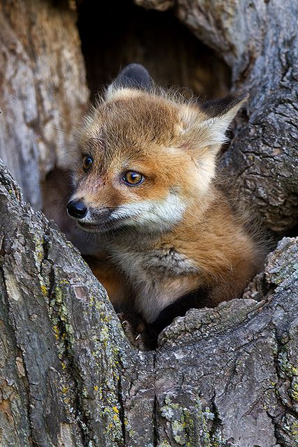 foxy-lovely-maow-design-blog