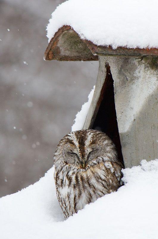 owl-lovely-maow-design-blog